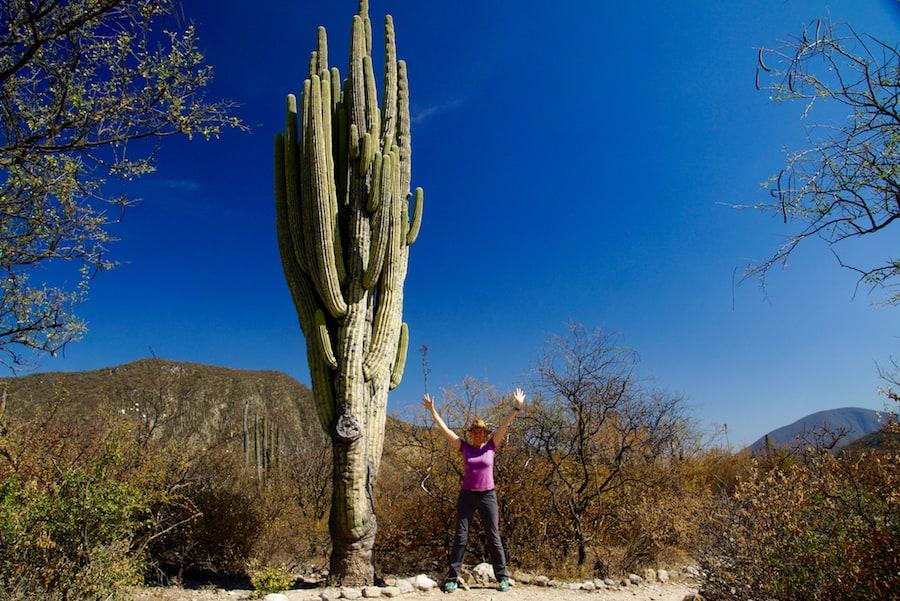 Kakteen Landschaft in Mexiko
