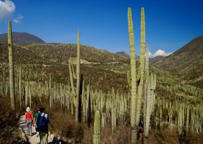 Kakteen im Hochland Mexikos