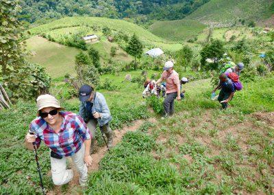 steile Aufstiege durch Plantagen